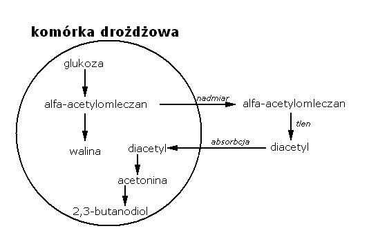 Diacetyl schemat