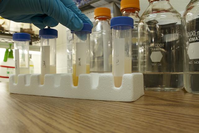 Bakterie Lactobacillus 2
