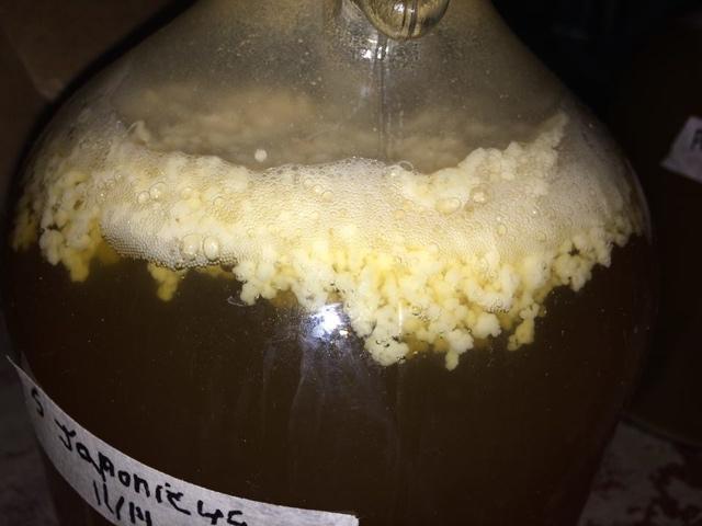 S. japonicus fermentacja